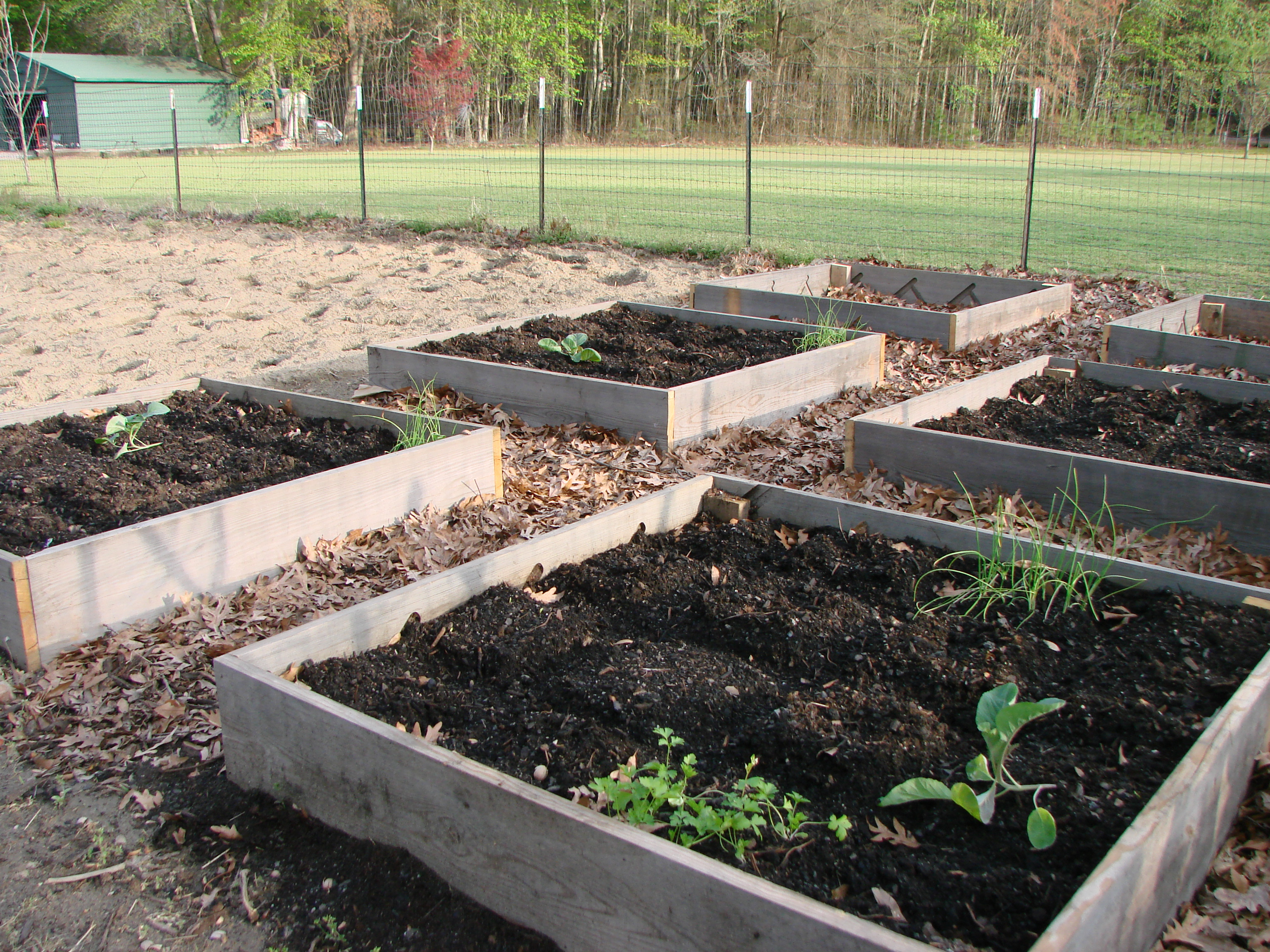 Friday Free For All  Square Foot Gardening