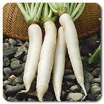 daikon radishes