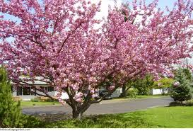 early spring flowering trees and shrubs