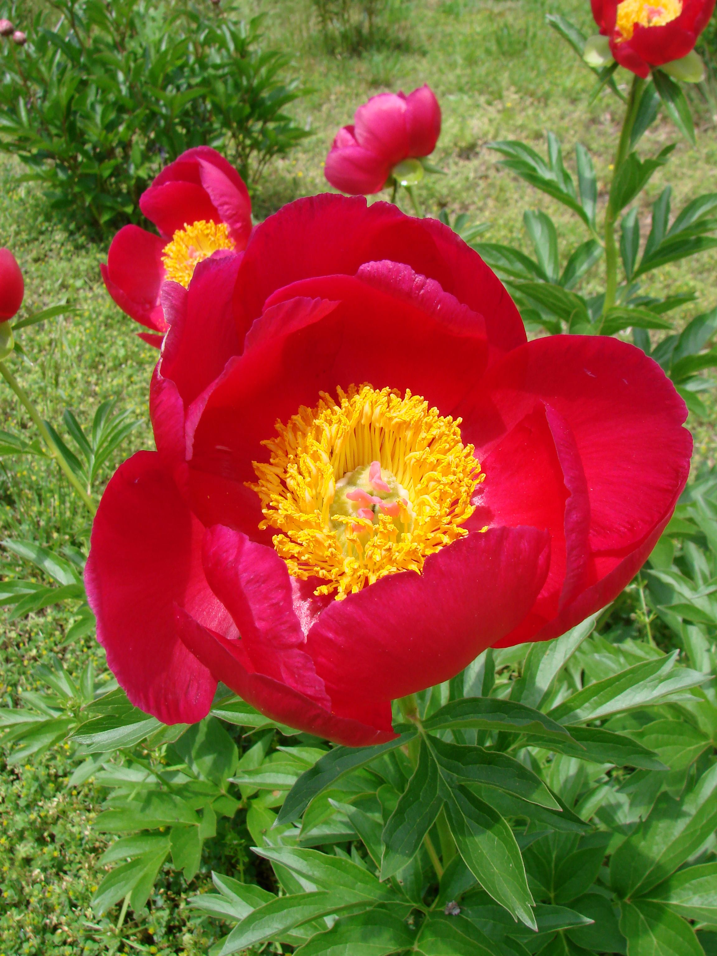 Perennials Mid Atlantic Gardening