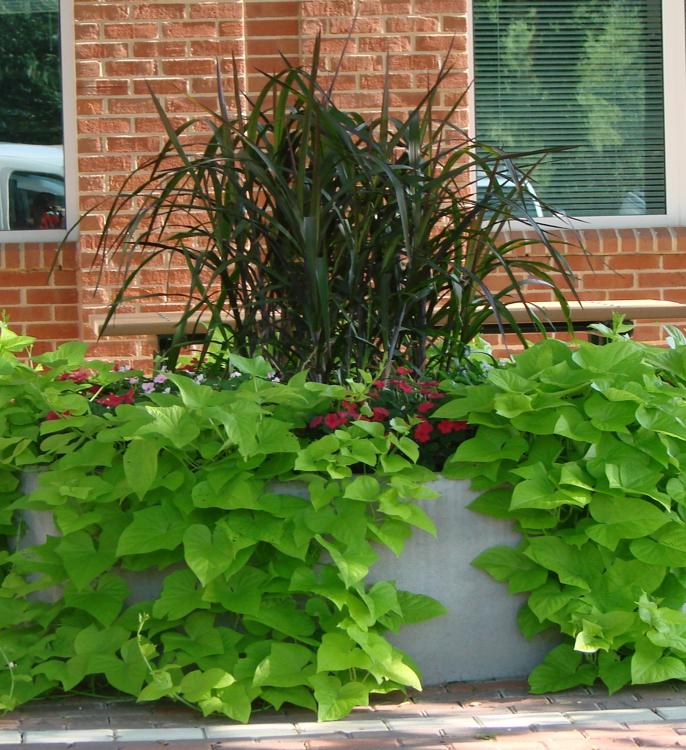 Plant Profile: Plant Combinations For Your Containers